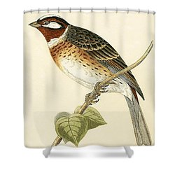 Pine Bunting Shower Curtain by English School