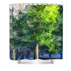 Pine Tree Forest Shower Curtain by Lanjee Chee