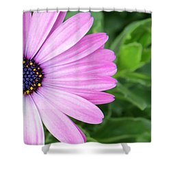 Pink Daisy Shower Curtain by Sabrina L Ryan