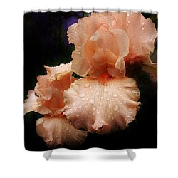 Pink Iris 1 Shower Curtain by Bruce Bley