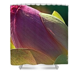 Pink Lotus Bud Shower Curtain by Heiko Koehrer-Wagner