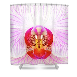 Pink Orchid Shower Curtain by Dave Bowman