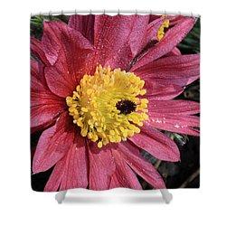 Pink Pasque Flower Shower Curtain by Carol Groenen