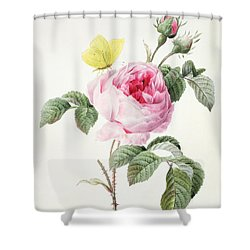Pink Rose With Buds And A Brimstone Butterfly Shower Curtain by Louise DOrleans