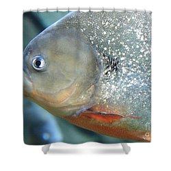 Piranha Tough Guy Shower Curtain by Carol Groenen