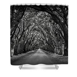 Plantation Oak Alley Shower Curtain by Perry Webster