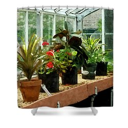 Plants In Greenhouse Shower Curtain by Susan Savad