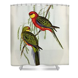 Platycercus Icterotis Shower Curtain by John Gould