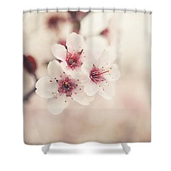 Plum Blossoms Shower Curtain by Lisa Russo