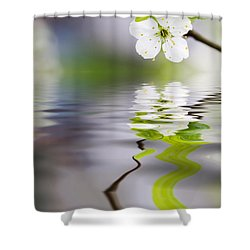 Plum Tree Blooming Shower Curtain by Kati Molin