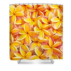Plumeria Flowers Shower Curtain by Kyle Rothenborg - Printscapes