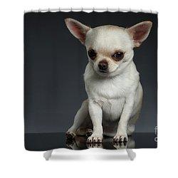 Portrait Little Chihuahua Dog Sitting On Dark Backgroun Shower Curtain by Sergey Taran