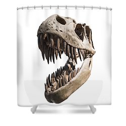 Portrait Of A Dinosaur Skeleton, Isolated On Pure White. Shower Curtain by Caio Caldas