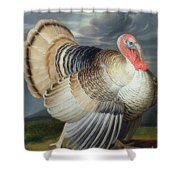 Portrait Of A Turkey  Shower Curtain by Johann Wenceslaus Peter Wenzal