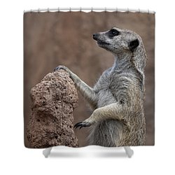Pose Of The Meerkat Shower Curtain by Ernie Echols