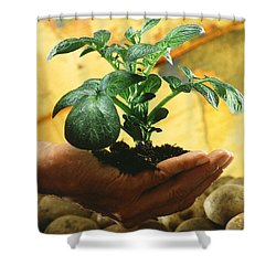 Potato Plant Shower Curtain by Science Source