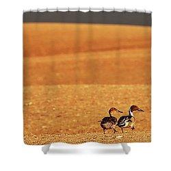 Prairie Storm And Ducks Canada Shower Curtain by Mark Duffy