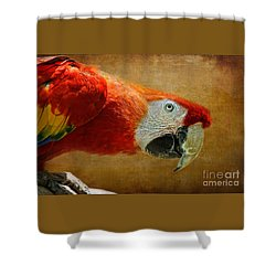 Pretty Boy Shower Curtain by Lois Bryan
