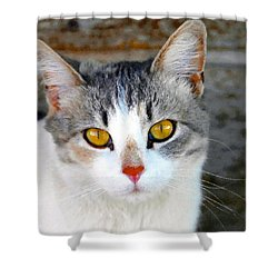 Pretty Kitty Shower Curtain by David Lee Thompson