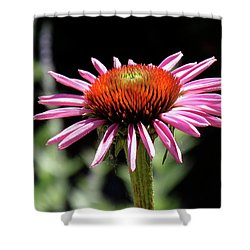 Pretty Pink Coneflower Shower Curtain by Rona Black