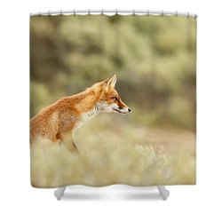 Princess Of The Hill - Red Fox Sitting On A Dune Shower Curtain by Roeselien Raimond