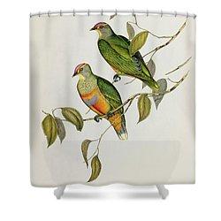 Ptilinopus Ewingii Shower Curtain by John Gould