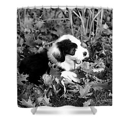 Puppy In The Leaves Shower Curtain by Kathleen Struckle