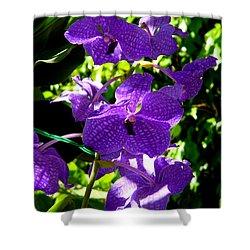 Purple Orchids Shower Curtain by Susanne Van Hulst