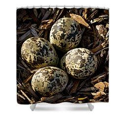 Quartet Of Killdeer Eggs By Jean Noren Shower Curtain by Jean Noren
