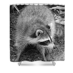 Raccoon - Black And White Shower Curtain by Carol Groenen