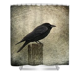 Raven Shower Curtain by Elena Nosyreva