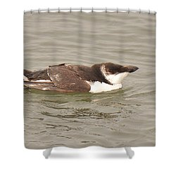 Razorbill Shower Curtain by Alan Lenk