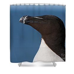 Razorbill Portrait Shower Curtain by Joshua Clark