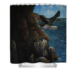 Razorbills Shower Curtain by Eric Petrie