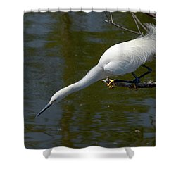 Ready..set.. Shower Curtain by Christopher Holmes