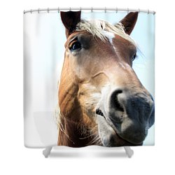 Really Shower Curtain by Amanda Barcon
