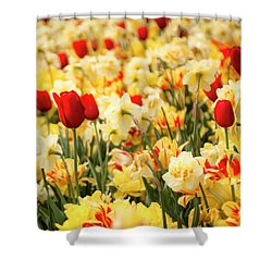 Red And Yellow Shower Curtain by Tamyra Ayles