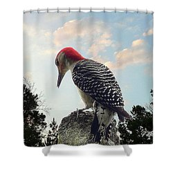 Red-bellied Woodpecker - Tree Top Shower Curtain by Al Powell Photography USA
