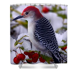 Red Bellied Woodpecker Shower Curtain by Ron Jones