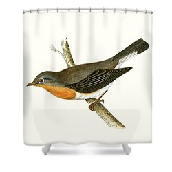 Red Breasted Flycatcher Shower Curtain by English School