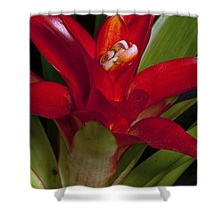 Red Bromiliad Shower Curtain by Christopher Holmes