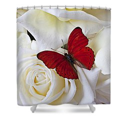 Red Butterfly On White Roses Shower Curtain by Garry Gay