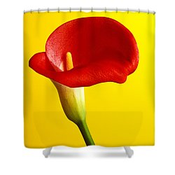 Red Calla Lilly  Shower Curtain by Garry Gay