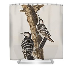 Red-cockaded Woodpecker Shower Curtain by John James Audubon