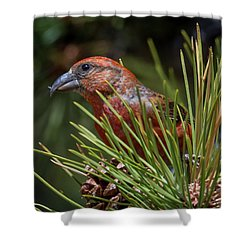 Red Crossbill Shower Curtain by Michael Cunningham