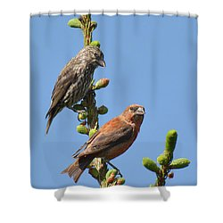 Red Crossbill Pair Shower Curtain by Alan Lenk