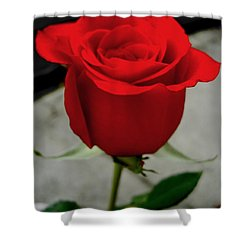 Red Dream Rose Shower Curtain by Nina Ficur Feenan