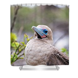 Red Footed Booby Closeup Shower Curtain by Jess Kraft