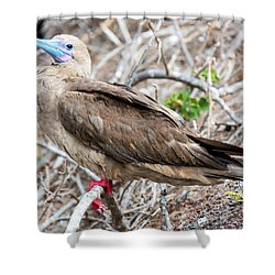 Red Footed Booby Shower Curtain by Jess Kraft