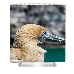 Red Footed Booby Juvenile Shower Curtain by Jess Kraft